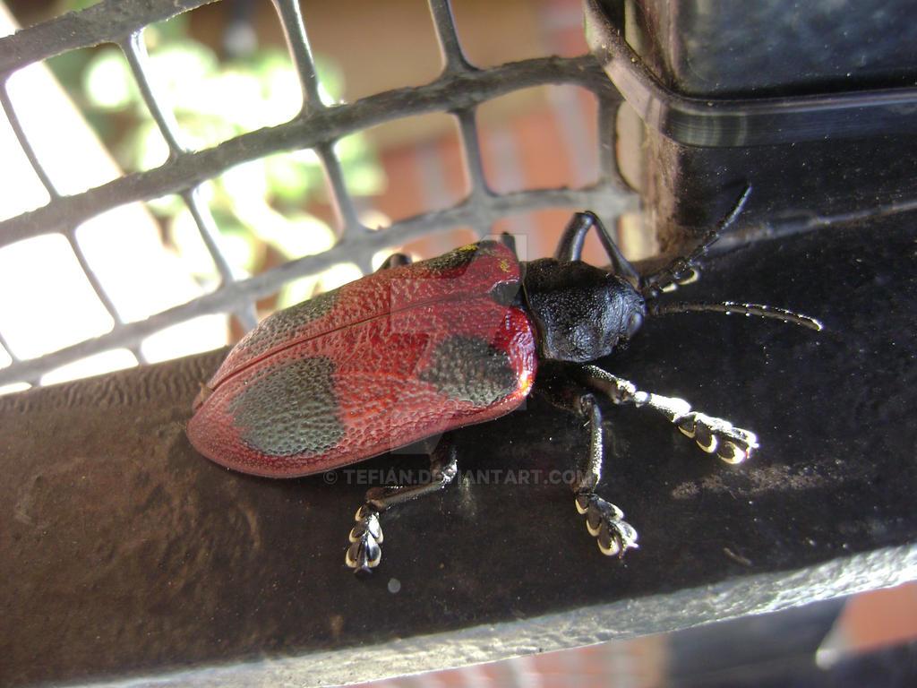 Mr bug by Tefian