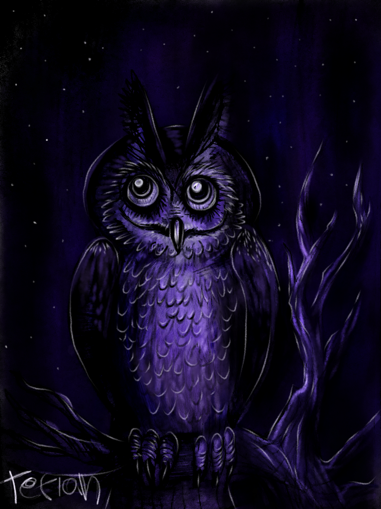 Night Owl by Tefian