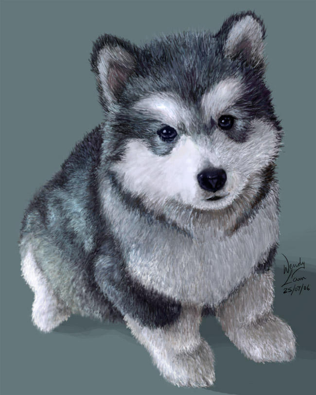 Husky puppy by hammy-burgersCute Husky Puppy Drawings