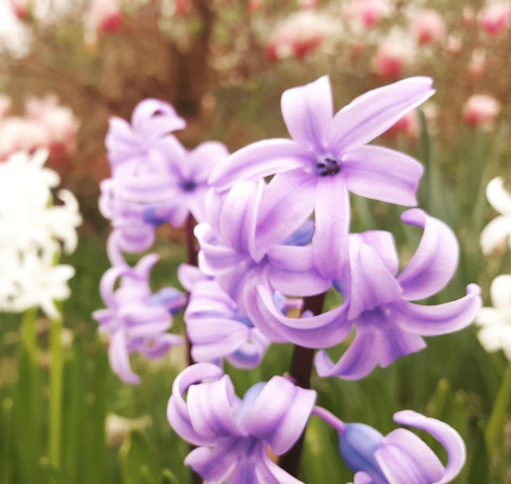 flower lila blume by jolina44 on deviantart. Black Bedroom Furniture Sets. Home Design Ideas