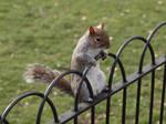 London Squirrel III