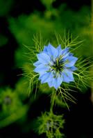Star Flower by BrightArrow