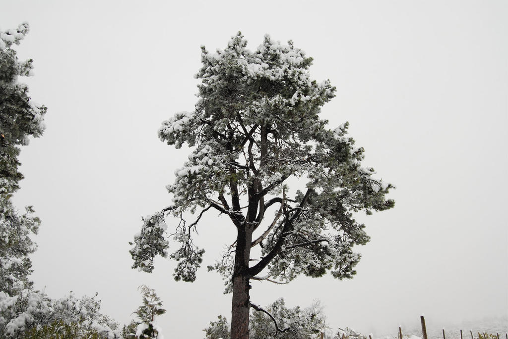 Winter Tree by BrightArrow