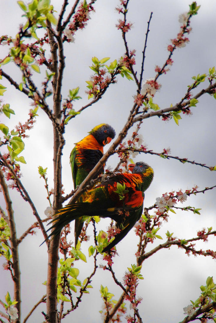 Parrot Chat by BrightArrow