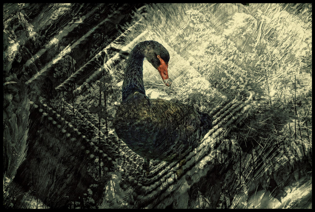 Black Swan by BrightArrow