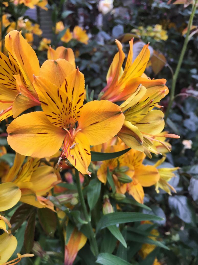 Spring in bloom by BrightArrow
