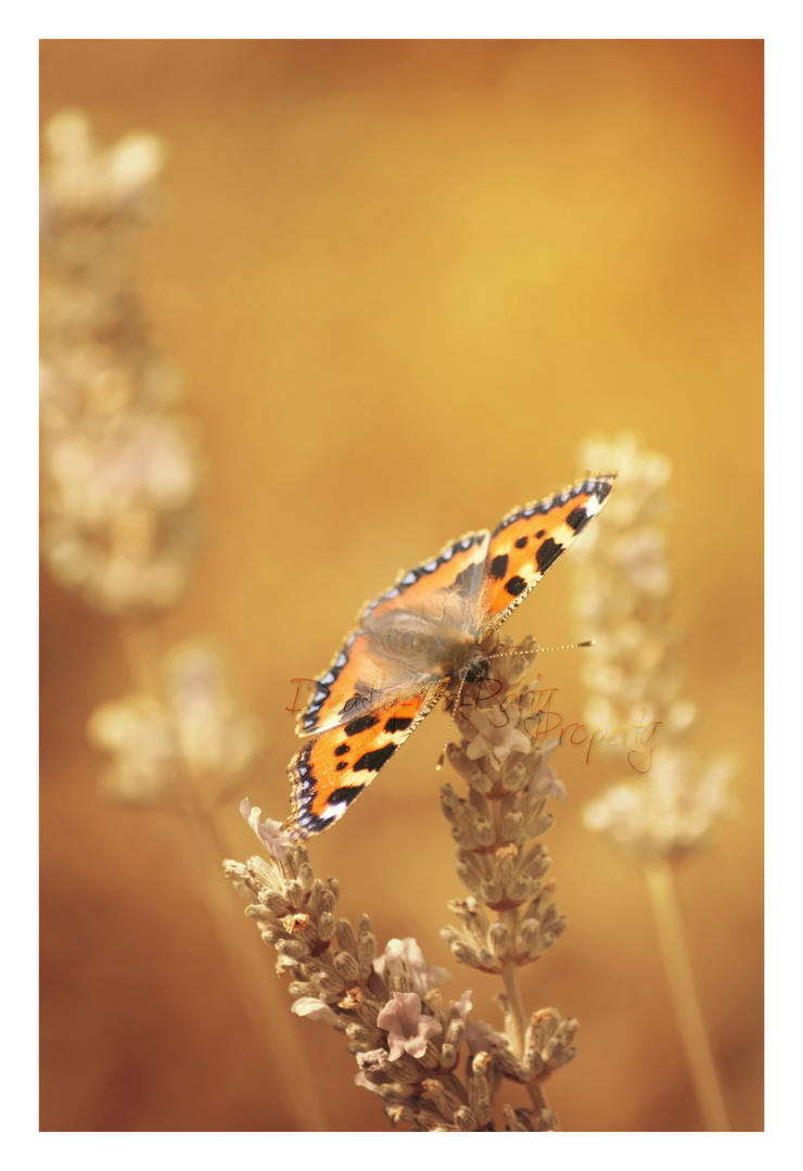 Copper Butterfly by CrystalGoldfinch