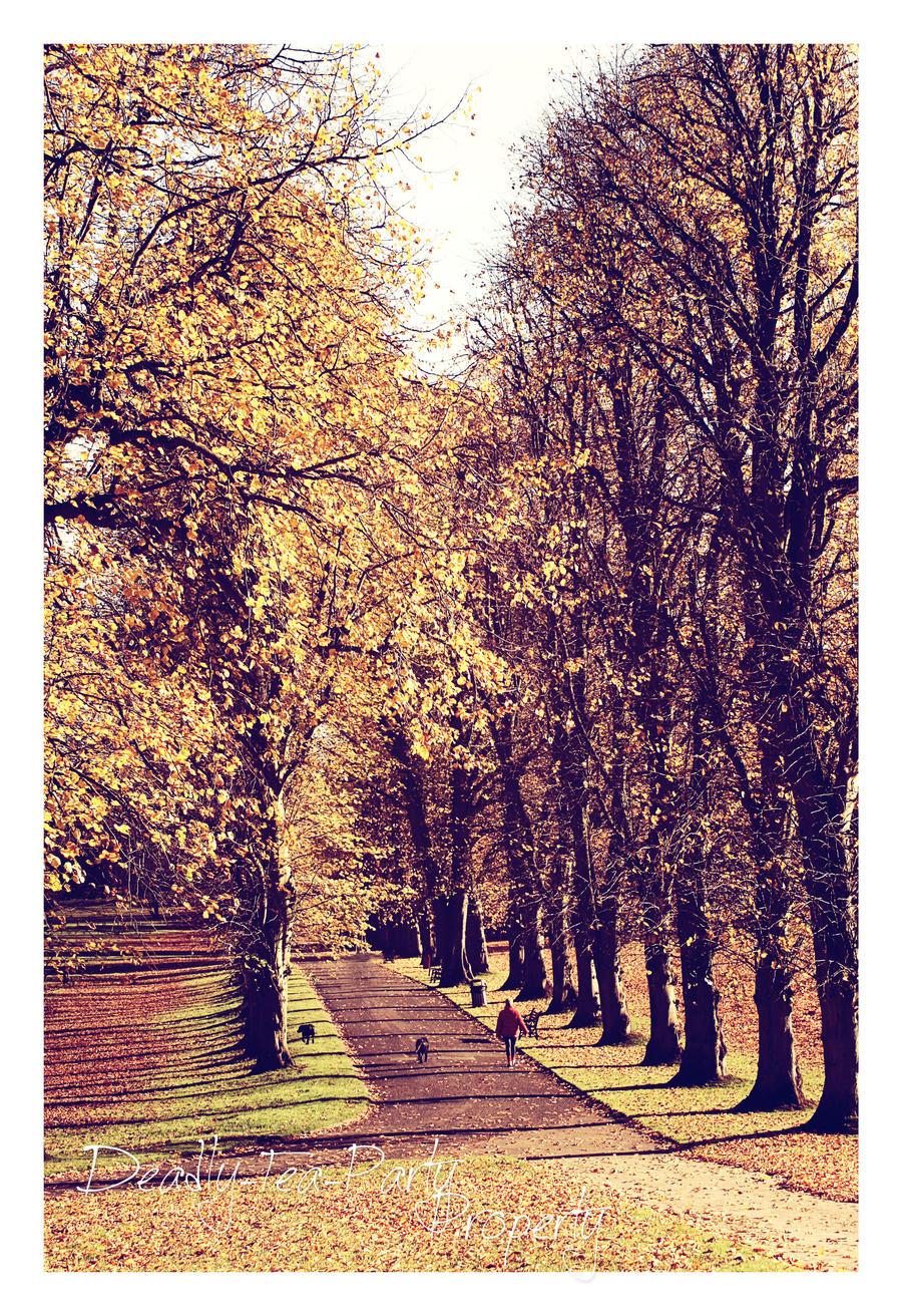 Autumn avenue by Deadly-Tea-Party