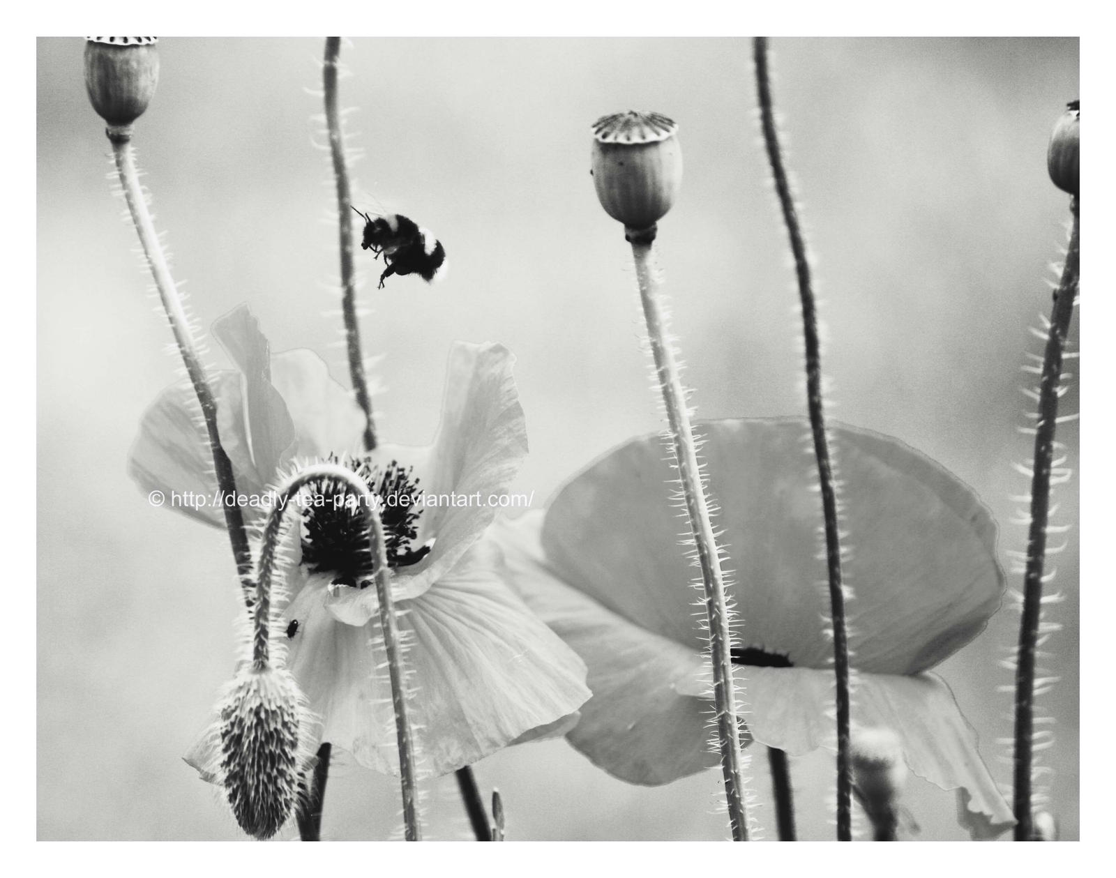Black and white bee by CrystalGoldfinch