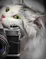 cat and camera by AG-photographya