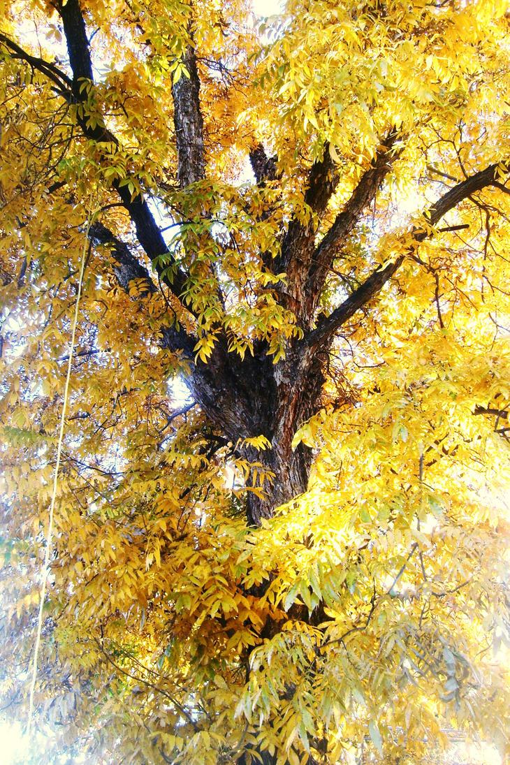 Fall by BunnyFeels