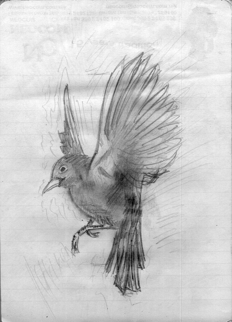 Nightingale flying drawing