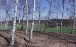 birch hill 4