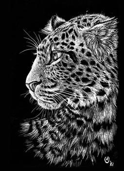 Scratch art: Chinese leopard