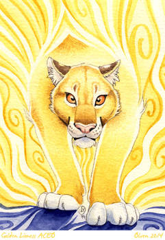 ACEO Golden lioness