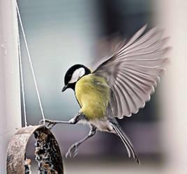 Bird Ballet by Tarjina