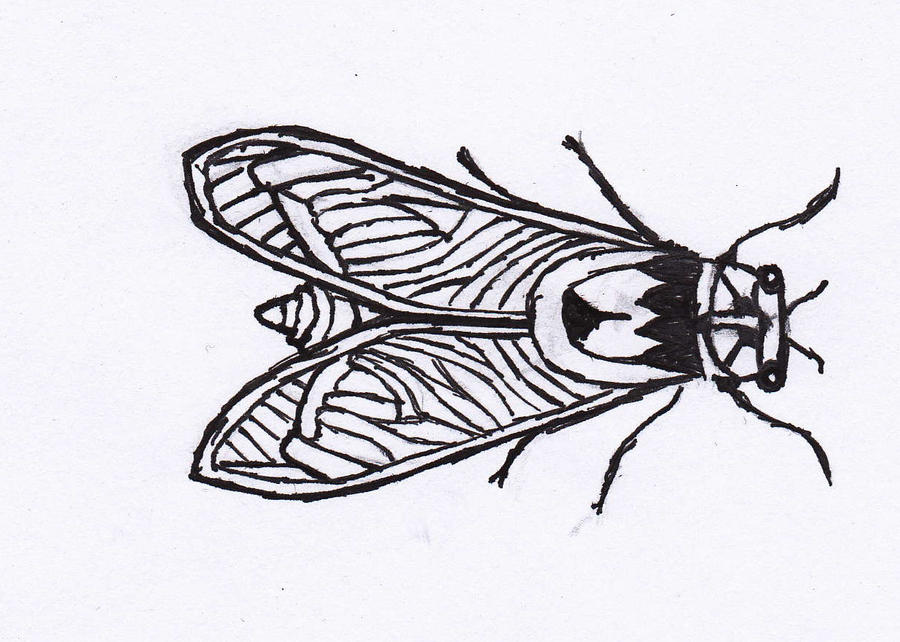 cicada diagram thing by completelyotaku on deviantart