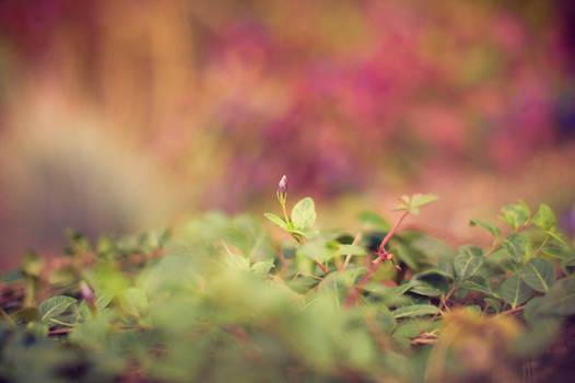Autumn Blossom