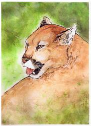 Puma by ersayer5