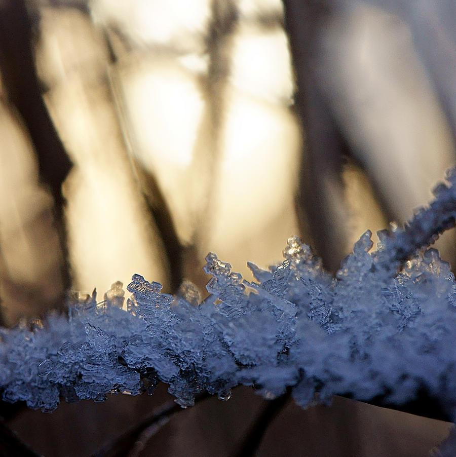 Ice Age by Katzilla13