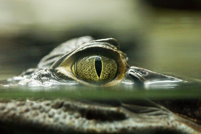 Be afraid... be VERY afraid by Katzilla13