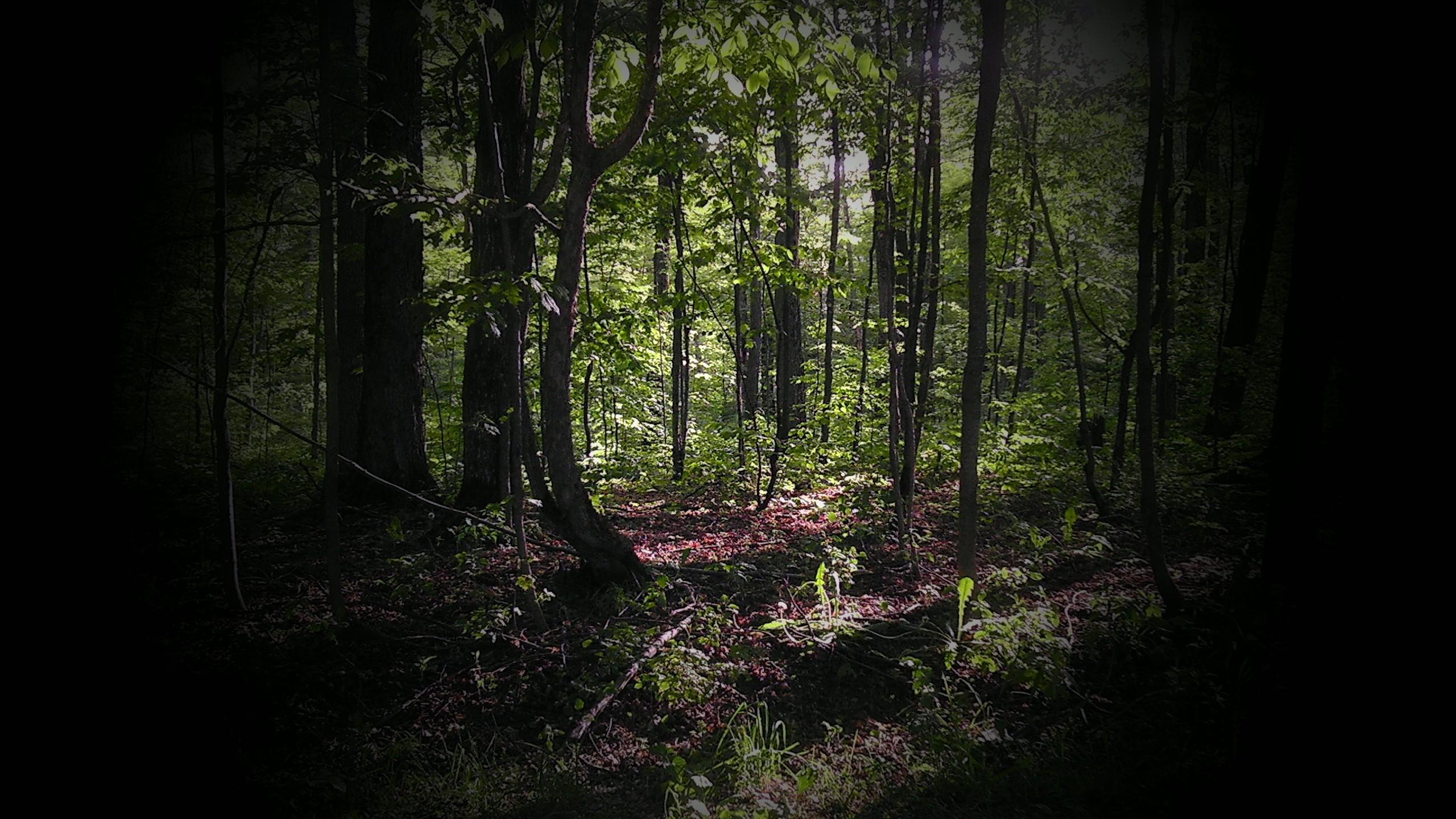 Deep woods by dennismonague on deviantart