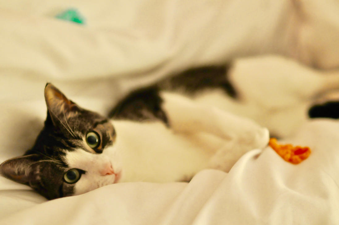 The Cutest Cat of them All by cellofilmwriting