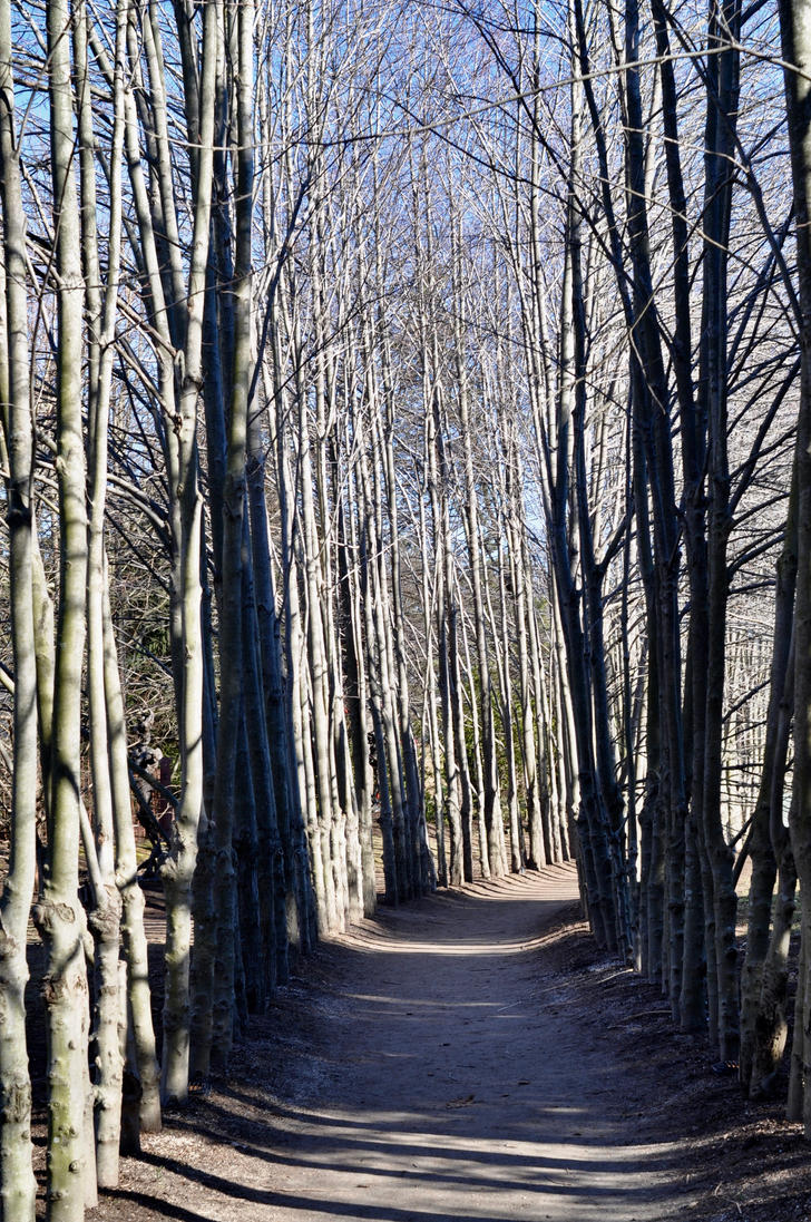 Through the Woods by cellofilmwriting