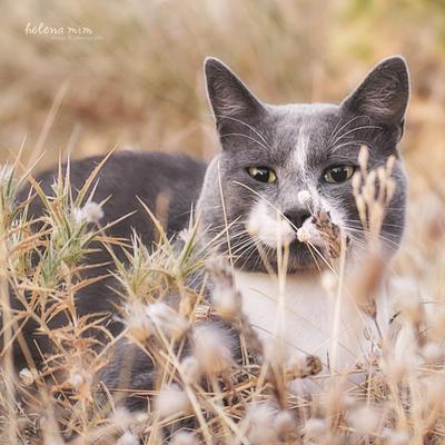 Wild Oscar by HelenaMim
