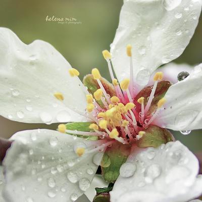 Drops In Pastel by HelenaMim