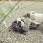 Playful Oscar by HelenaMim