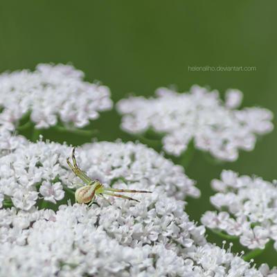 Itsy Bitsy Spider by HelenaMim