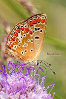Spotted Butterfly by HelenaMim