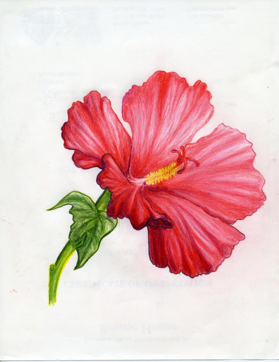 Hawaiian hibiscus flower drawings hawaiian hibiscus flower drawings photo12 izmirmasajfo