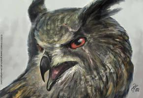 Hardcase Owl