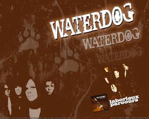 Waterdog - Laborieux Parcours