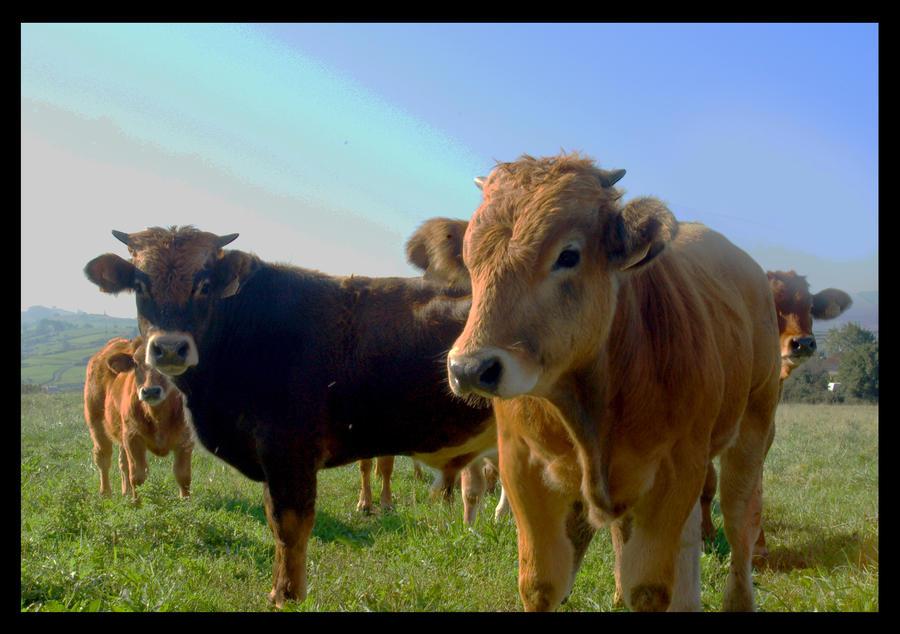 cows by EmbetanteYahi
