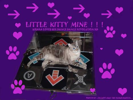Little kitty mine