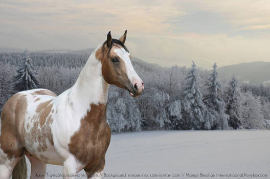 Paint Horse Picture