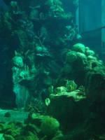 Mermaid Sanctuary Stock by Queens-Revenge