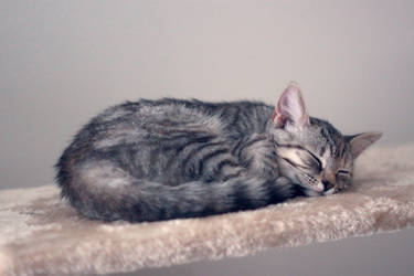 Sleepy princess by bbleu
