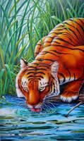 Tigre sediento by Real-Warner