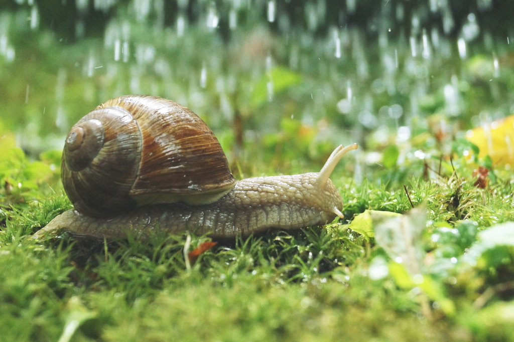 Summer Rain by Rick-TinyWorlds