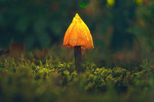 A New Kind Of Mushroom by Rick-TinyWorlds
