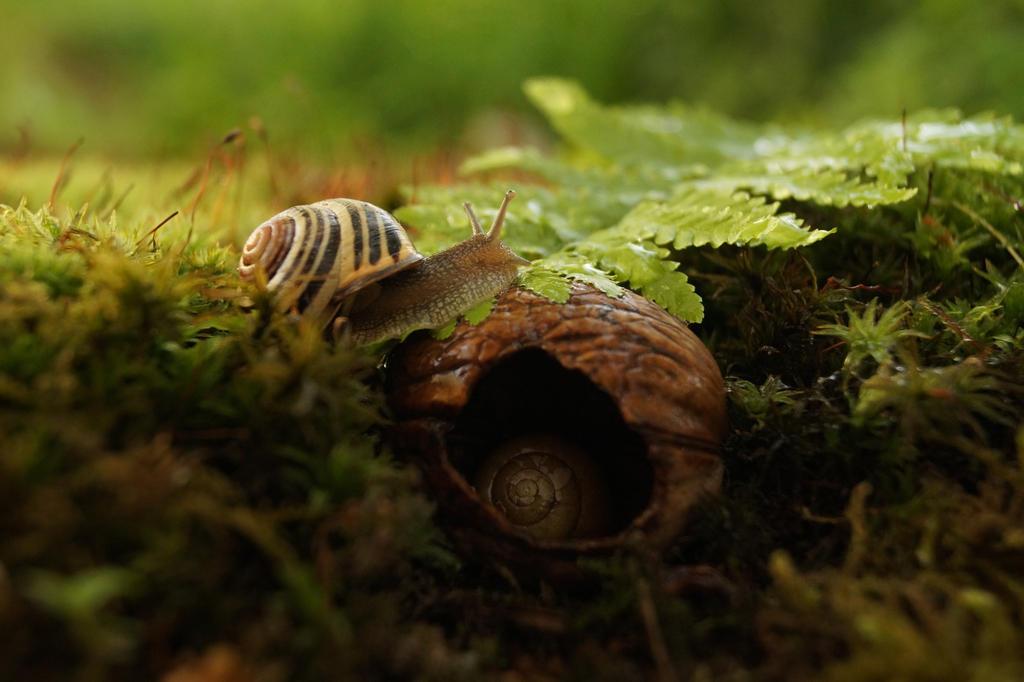 My Tiny Refuge by Rick-TinyWorlds