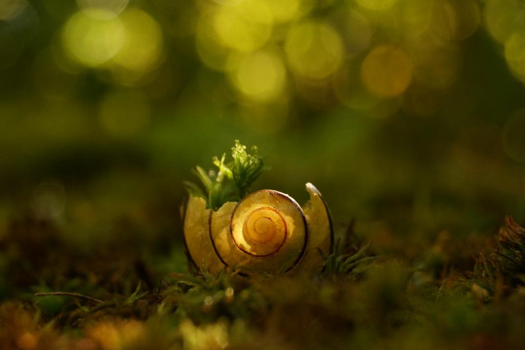 Circle of Life by Rick-TinyWorlds