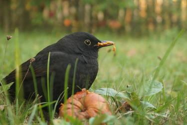 Little Blackbird by Rick-TinyWorlds
