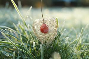 Winter Cherry by Rick-TinyWorlds