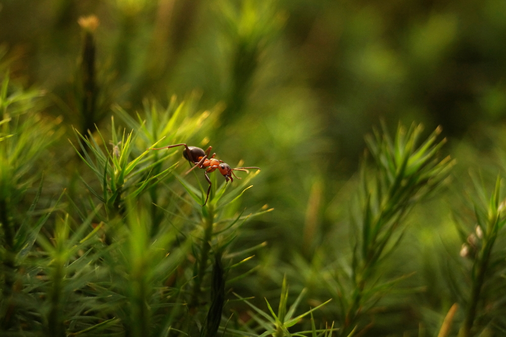 Tiny Ant by Rick-TinyWorlds