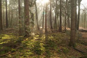 A Beautiful Morning by Rick-TinyWorlds
